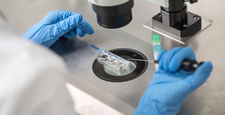 IVF in laboratory